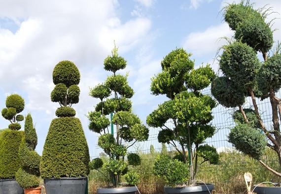Plantes Naturelles 1 Pln